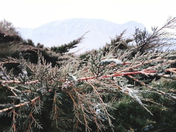nature Nature Cold Temperature Day Outdoors No People Winter Growth Tree Sky Snow Beauty In Nature Mountain Tranquility Landscape Close-up