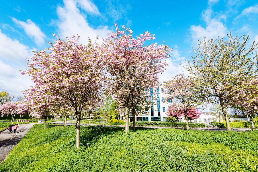 Tree Flower Blossom Growth Springtime Cloud - Sky Sky Nature Beauty In Nature Day No People Green Color Outdoors Architecture Freshness Plant Scenics Building Exterior Grass Alphen Aan Den Rijn hollaNd