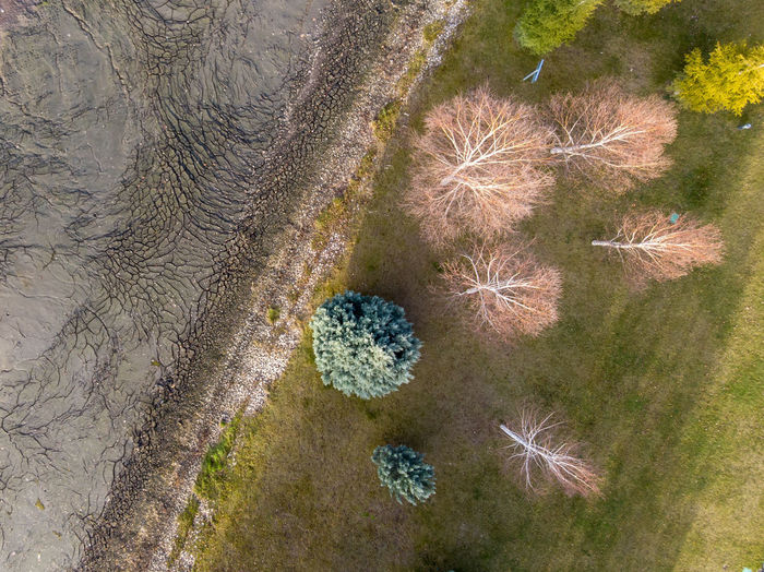 An aerial view of mud on riverside with cracks on it. There are trees also. Plant Nature No People High Angle View Day Flower Beauty In Nature Growth Land Close-up Flowering Plant Tranquility Vulnerability  Fragility Freshness Outdoors Field Succulent Plant Directly Above Pattern Mud Cracks Dronephotography Top View Aerial View