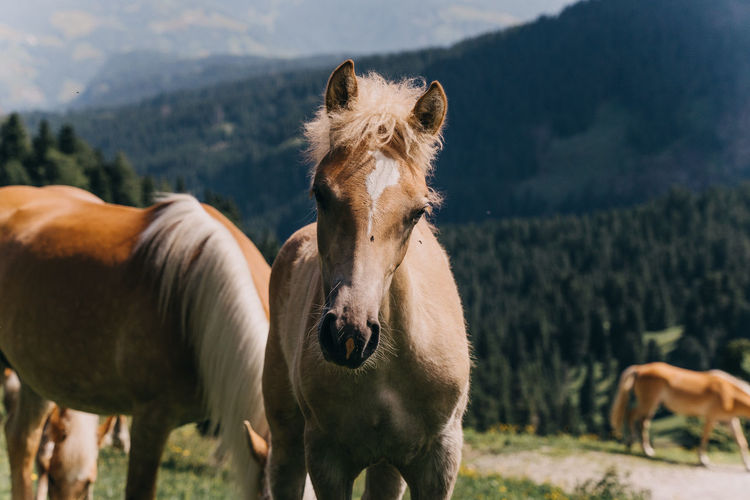Baby Horse Young Horse Mammal Horse Animal Themes Animal Domestic Animals Domestic Pets Livestock Animal Wildlife Vertebrate Group Of Animals Land Field Plant Nature Tree No People Mountain Outdoors Two Animals Herbivorous Day Dolomites Dolomites, Italy Italy Alpe Di Siusi