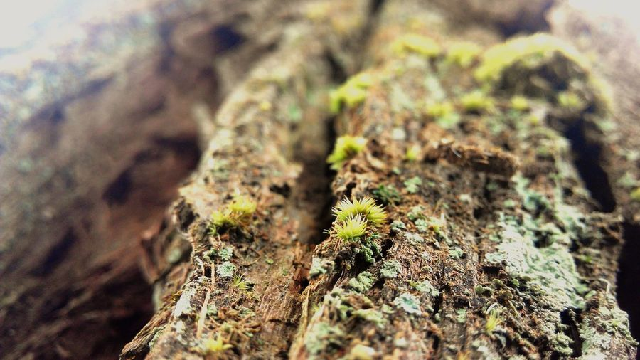 Macro Beauty Click By Nsk Macro Beauty Of Tree Trunk