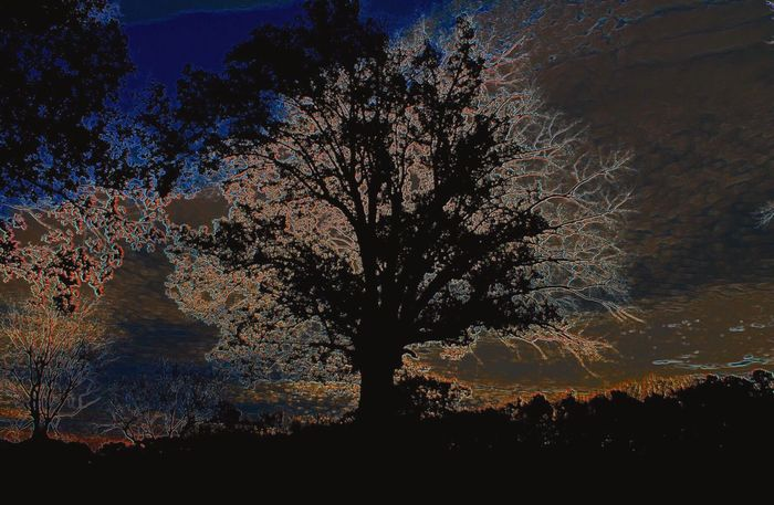 Tree And Sky Trees Tree_collection  Treescollection Treeart