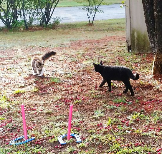 Whats going to happen here?? Animal Themes Domestic Animals Two Animals Pets Animal No People Outdoors Animal Head  Cat Family Cat Domestic Cat Feline Family Pet Animal Hair Black Color Pretty Cat Day Fluffy Cat