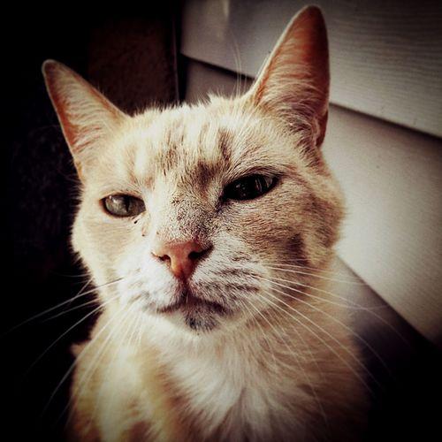 Pet Portraits Cat Adoption