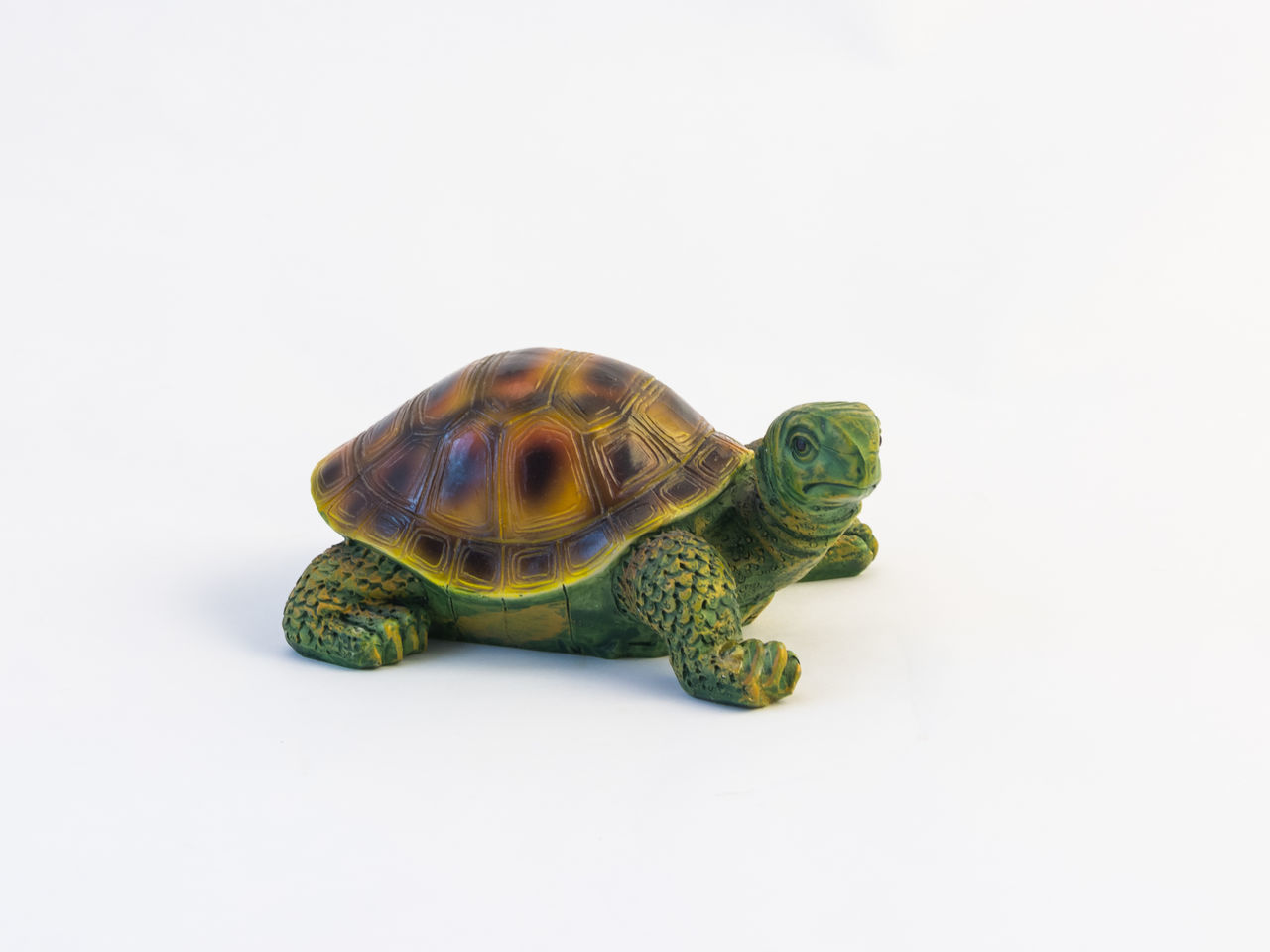 one animal, copy space, white background, tortoise, turtle, studio shot, reptile, animal themes, animals in the wild, animal wildlife, no people, tortoise shell, sea turtle, close-up, nature, day