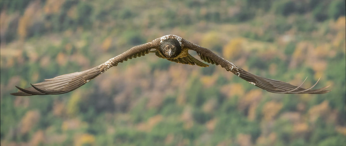 Low angle view of eagle flying against mountain