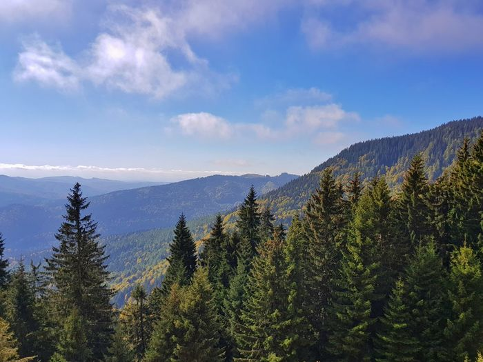 Blue Sky Scenics Tranquil Scene Tranquility Mountain Range High Angle View Aerial View Green Color Nature Beauty In Nature Beauty Idyllic Mountain Peak Mountain View Coniferous Tree Calm Tree Mountain Forest Pine Tree Pinaceae Sky Landscape Cloud - Sky Foggy