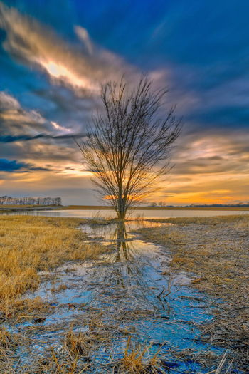 Bare tree on snow covered field against sky during sunset