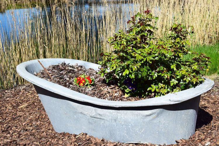 Die Badewanne ist leider besetzt.... Plant Growth Nature Day No People Potted Plant Water Beauty In Nature Outdoors Sunlight Tranquility Tree Lake Freshness Plant Part Flower Solid Land Flower Pot Tub