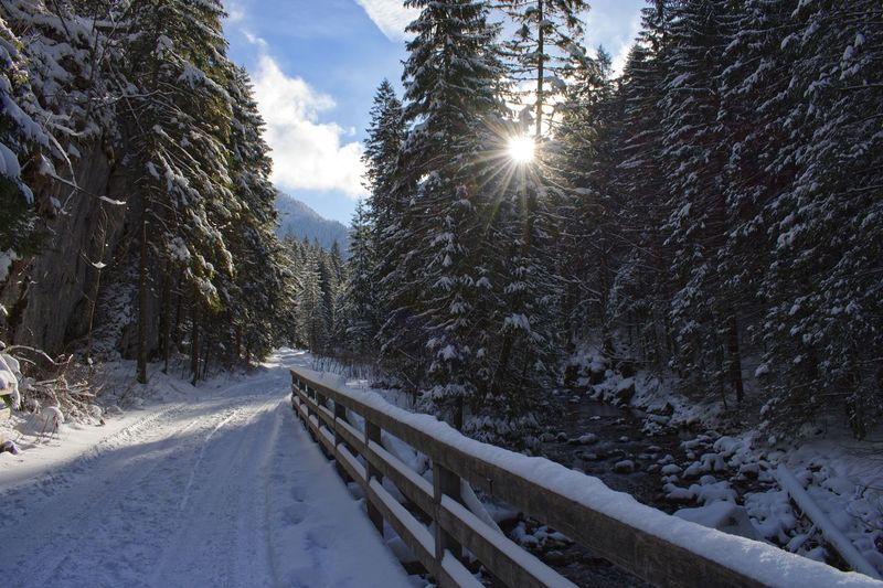 Poland Zakopane Winter Snow Tree Cold Temperature Plant Nature Beauty In Nature Sunlight Sky Growth Scenics - Nature Sun Day Forest Covering Sunbeam Lens Flare No People Tranquility