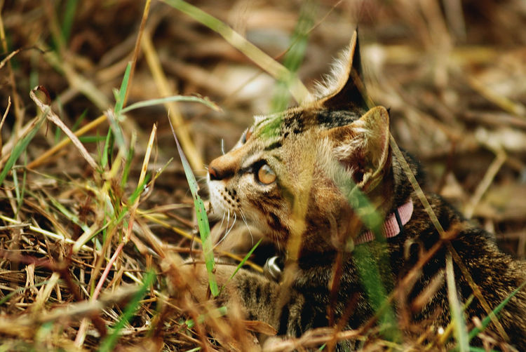Close-Up Of Cat In Grass