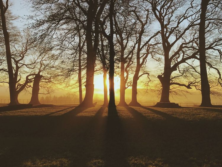 Standing on the edge of The Cotswolds. Tree Nature Sunlight Tranquil Scene Beauty In Nature Scenics Tranquility Tree Trunk Shadow Outdoors Sunset Idyllic Sun No People Growth Bare Tree Landscape Branch Sky Day Cotswolds The City Light The Great Outdoors - 2017 EyeEm Awards Lost In The Landscape