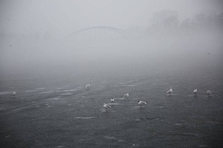 Copy Space Ice Winter Animal Themes Animals In The Wild Bird Bridge Day Depression - Sadness Dreary Dull Fog Gull Mist Monochrome Nature No People Outdoors Sadness Seagull Surface Water