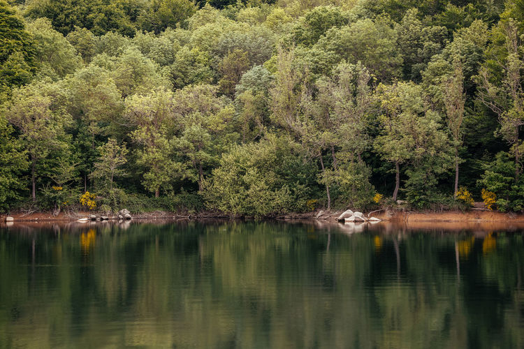 Reflection of trees on a lake