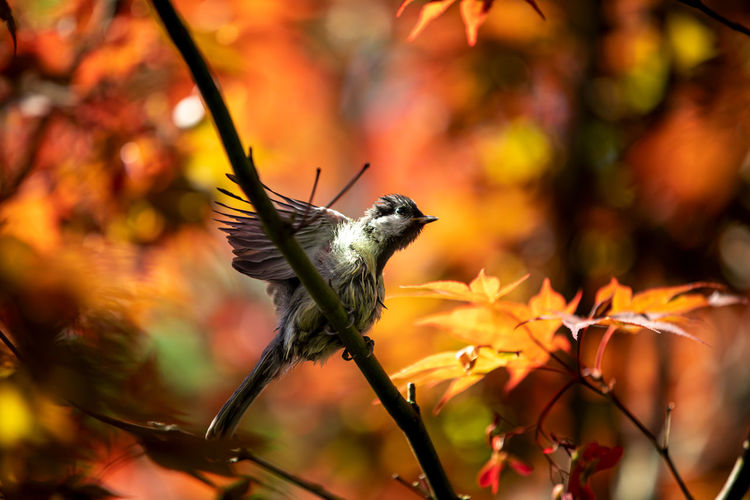 Close-up of bird on plant during autumn