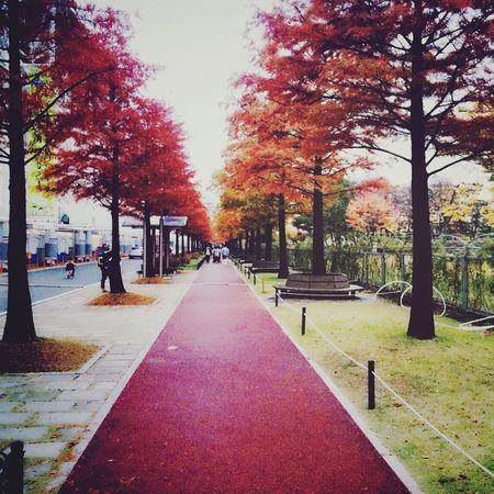 Daejeon, Korea Foilage Square First Eyeem Photo