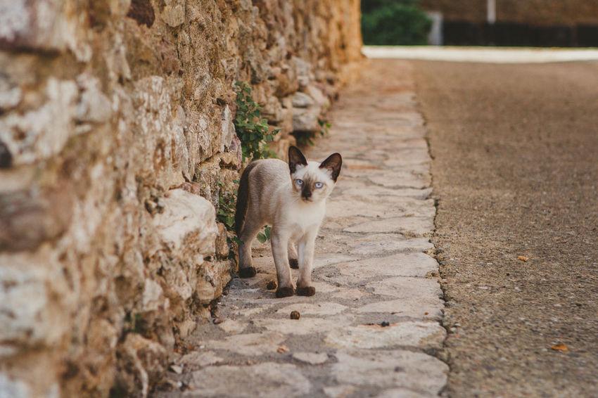 Animal Animal Themes Animal Wildlife Animals In The Wild Cat Day Domestic Domestic Animals Domestic Cat Feline Footpath Herbivorous Mammal Nature No People One Animal Outdoors Pets Selective Focus Solid Vertebrate