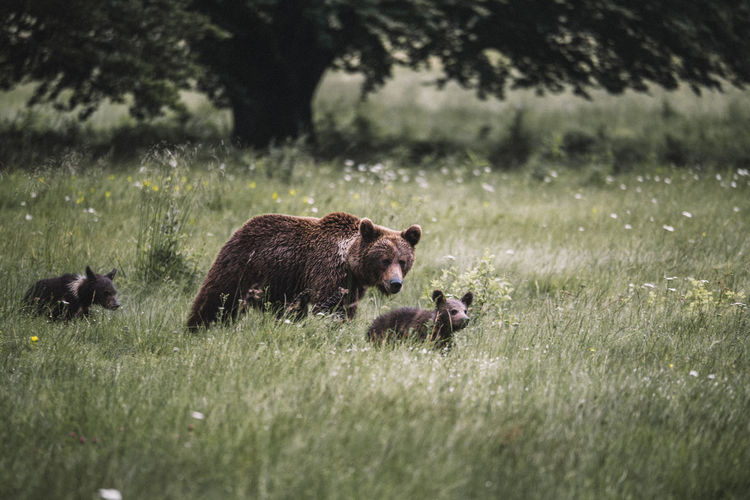 Nature Animal Animal Family Animal Themes Animal Wildlife Animals In The Wild Bear Beauty In Nature Day Field Grass Group Of Animals Herbivorous Land Mammal Nature Nature_collection No People Outdoors Plant Selective Focus Tree Two Animals Vertebrate Young Animal The Great Outdoors - 2018 EyeEm Awards