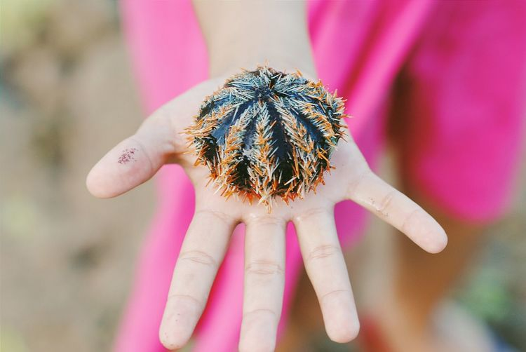 Cropped image of woman holding sea urchin