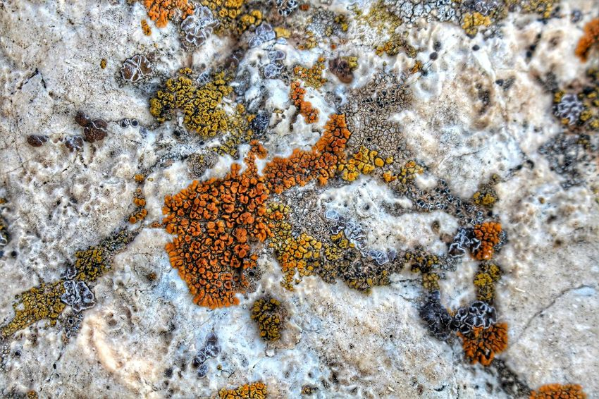 What's life? Backgrounds Beauty In Nature Close-up Day Elevated View Full Frame Lichen Natural Pattern Nature No People Outdoors Starfish  Texture Textures And Surfaces Tranquility