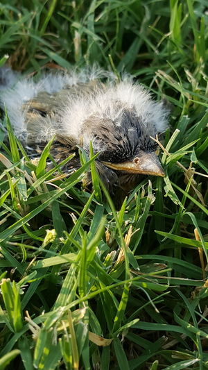 One Animal Animal Wildlife Animals In The Wild Animal Themes Nature Outdoors No People Green Color Day Close-up Baby Bird Fallen Nest Bird Poor Baby Baby Animals Leaf Hatchling Chick