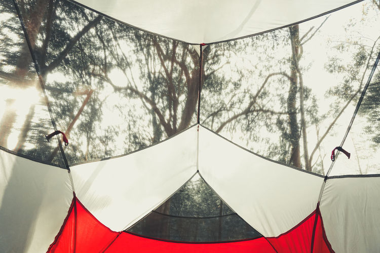 Tree Day Tent