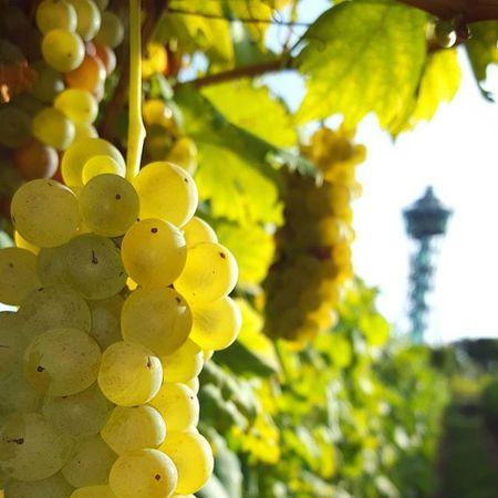Vinariumlendava Vinarium -lendava Trgatev Prekmurje Igslovenia