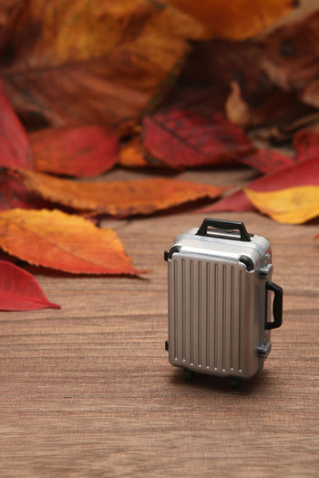 Autumn Autumn colors Autumn Leaves Autumnal Leaves Copy Space Travel Trip Autumn Autumnal Baggage Change Fall Fall Leaves Fallen Leaves Journey Leaf Leaves Luggage Nature No People Plant Part Still Life Suitcase Toy Wood - Material