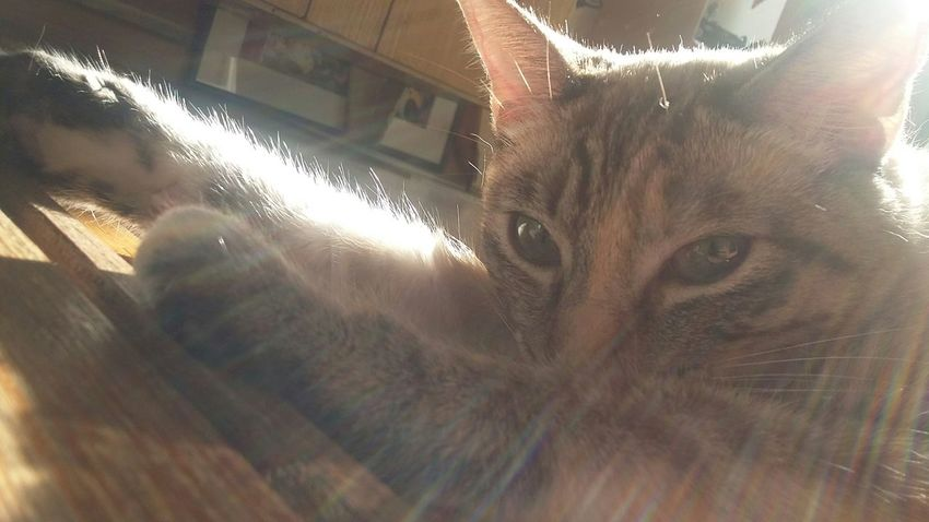 Taking Photos Check This Out Beautiful Cat No Filter Cute Pets Sunny Animals Enjoying The Sun