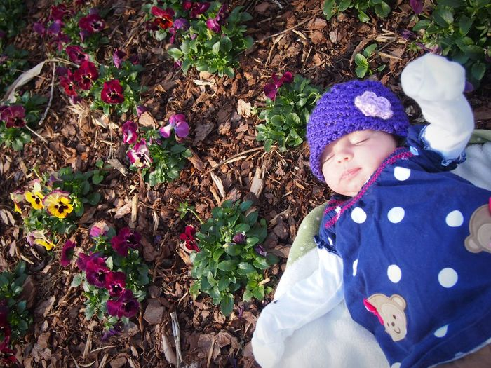 Baby Always Be Cozy Warm Clothing Snuggly One Person Garden Flowers Nature Baby Outdoors Flower Garden Purple Knit Hat Infant Sleeping Baby  Baby Sleeping In A Garden Outdoor Life Fresh Air And Sunshine Healthy Naturelover Earthy Pansies Purple Pansies Purple Flowers