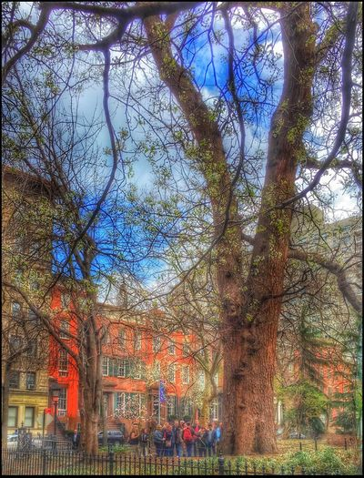 Nature Walk, Tree ID - 3/23/16 Architecture Auto Post Production Filter Building Exterior City EyeEm Best Shots EyeEm IPhoneography 6s EyeEm StreetPhotography, NYC IPhone Edits In Snapseed People Learning Tree ID Residential Building Tree Trunk Urban Spring Fever