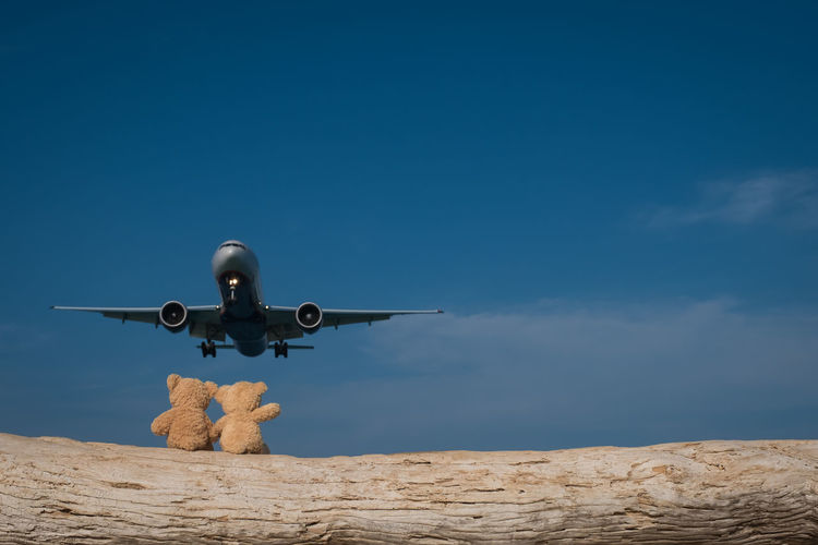 Low Angle View Of Airplane Flying Over Teddy Bear