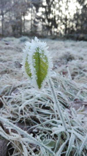 Nature Winter Cold Temperature Close-up Outdoors Beauty In Nature No People Day Plant Growth Nofilternoedit Nofilterneeded Fog Focus On Foreground