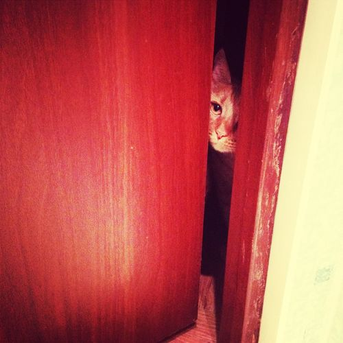 My cat Cat Martyn Pets Cutepets