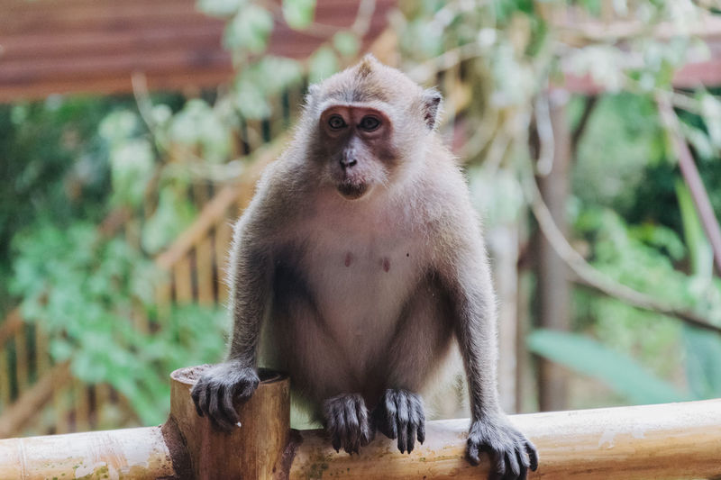 Khaosok Thailand Animal Themes Animal Wildlife Animals In The Wild Close-up Day Focus On Foreground Infant Japanese Macaque Mammal Monkey Nature One Animal Outdoors Portrait Sitting