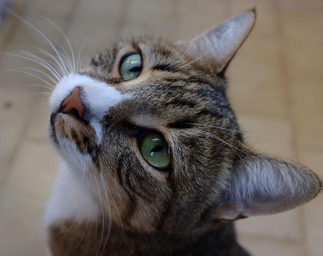 Cat One Animal