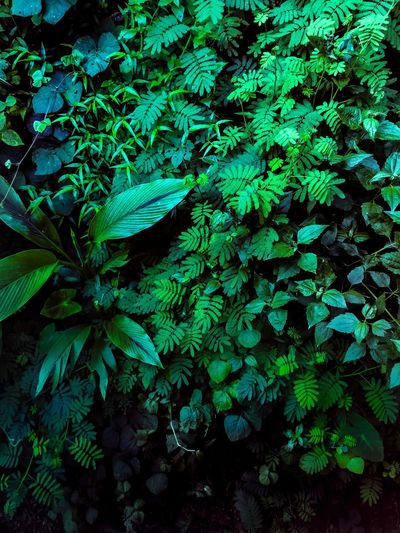 Leaf Nature Green Color Beauty In Nature Freshness Photographer Green Ipadair2 Growth Travel Window View India Kerala The Gods Own Country ;) Kerala HDR Black Dehaze Photo AdobeLightroom Adobe Photoshop Adobe Leaves Darkgreen Lighting Equipment Colorful