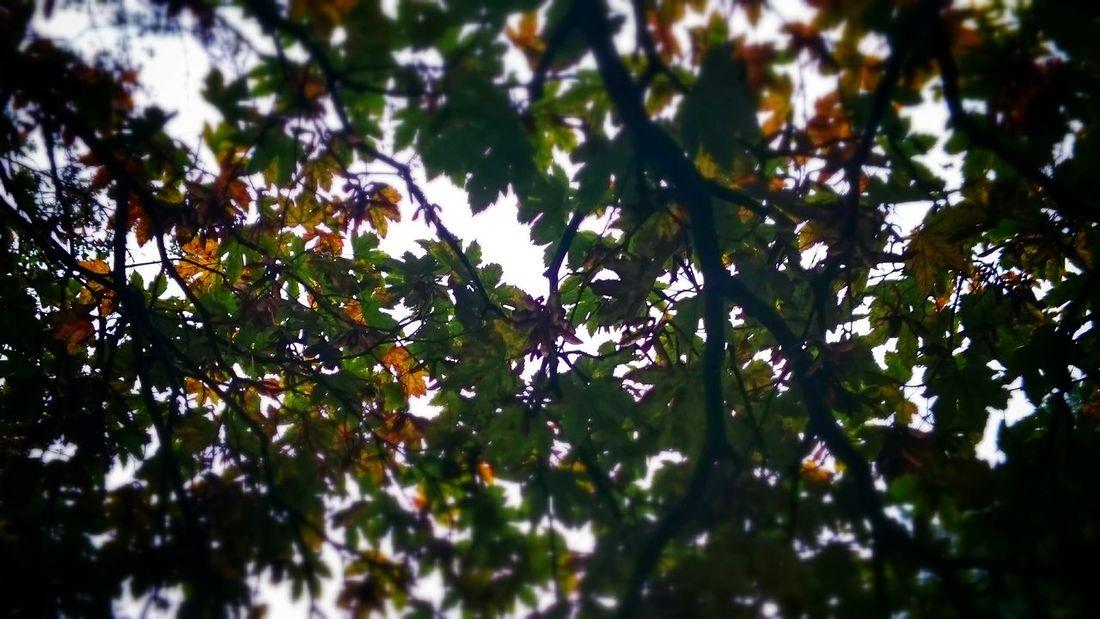 Autumn Leaves Autumn Leaves Lookingup