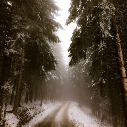Moody path in the woods with snow Dark Moody Winter Snow Tree Cold Temperature Nature Weather The Way Forward Beauty In Nature No People Tranquility Outdoors Forest Road