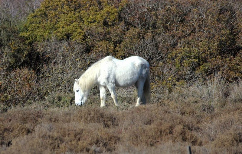 Fos Sur Mer Provence Beauty In Nature Cheval Blanc Domestic Animals Horse Nature One Animal