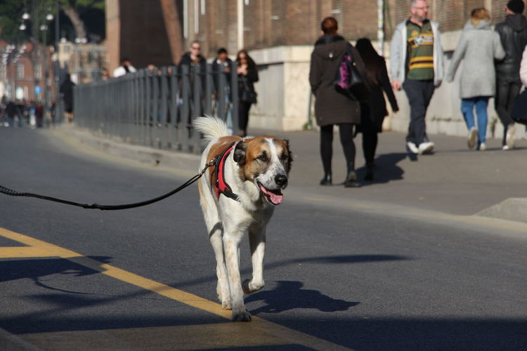 Dog walking on road in city