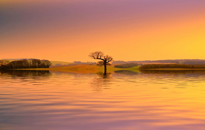 Evening light Water Sky Lake Reflection Tranquility Sunset Tree Nature Plant Beauty In Nature Scenics - Nature No People Tranquil Scene Copy Space Orange Color Outdoors Environment Landscape Non-urban Scene
