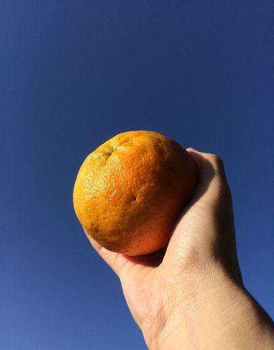 This is the pokan. Its almost like a tangerine. I love it. Creative Photography Vitamin C Ponkan Tangerine Blue Sky Beauty In Nature Fruits Fruit Photography The Week Of Eyeem Fruits ♡ Eating Healthy Holding Food And Drink Food Freshness Blue Close-up Fruit Healthy Eating Nature