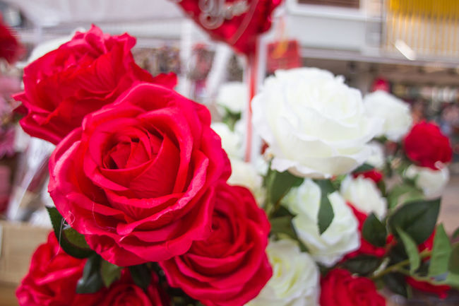 Plastic Roses🌹 Beauty In Nature Close-up Day Flower Flower Head Fragility Freshness Nature No People Outdoors Petal Red Rose - Flower