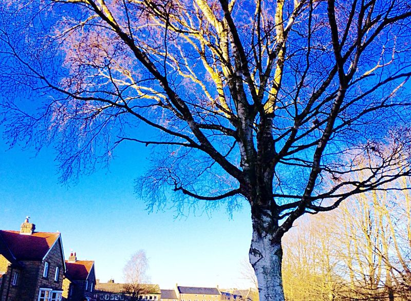 Tree top Tree Building Exterior Branch Blue Sky Low Angle View Bare Tree Clear Sky Outdoors Nature Day Winter Beauty In Nature Freshness Sunlight Ashbourne Derbyshire