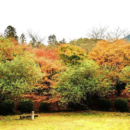 Autumn Leaves Autumn🍁🍁🍁 Trip Drive