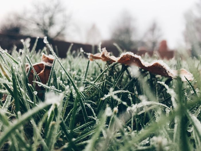 First frost ❄️ Nature Grass Outdoors Beauty In Nature Winter Day Cold Temperature Frost Frosty Frosty Mornings Ice Macro Nature_collection Nature Frozen Dew
