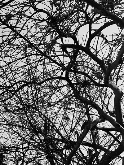 Branches Tree Sky Sunny Day Winter Winter Trees B&w Blackandwhite