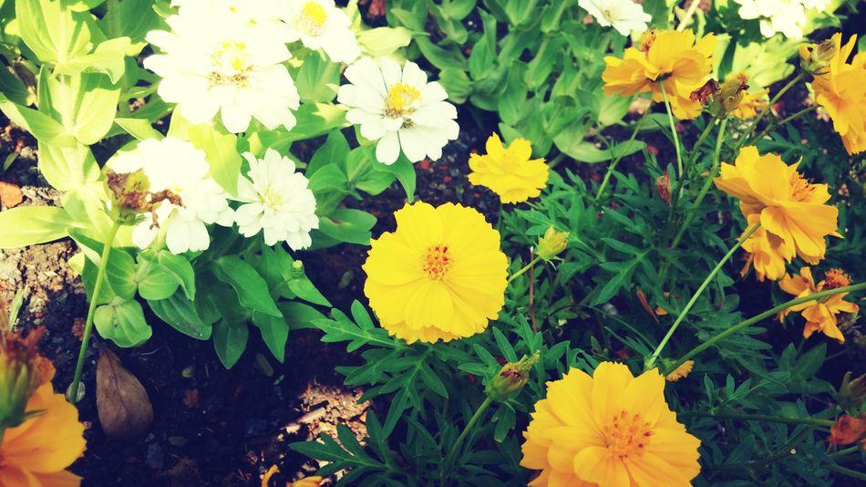 Yellow Flowerporn Yellow