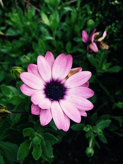 Flower Pink Color Petal Nature Plant Beauty In Nature First Eyeem Photo